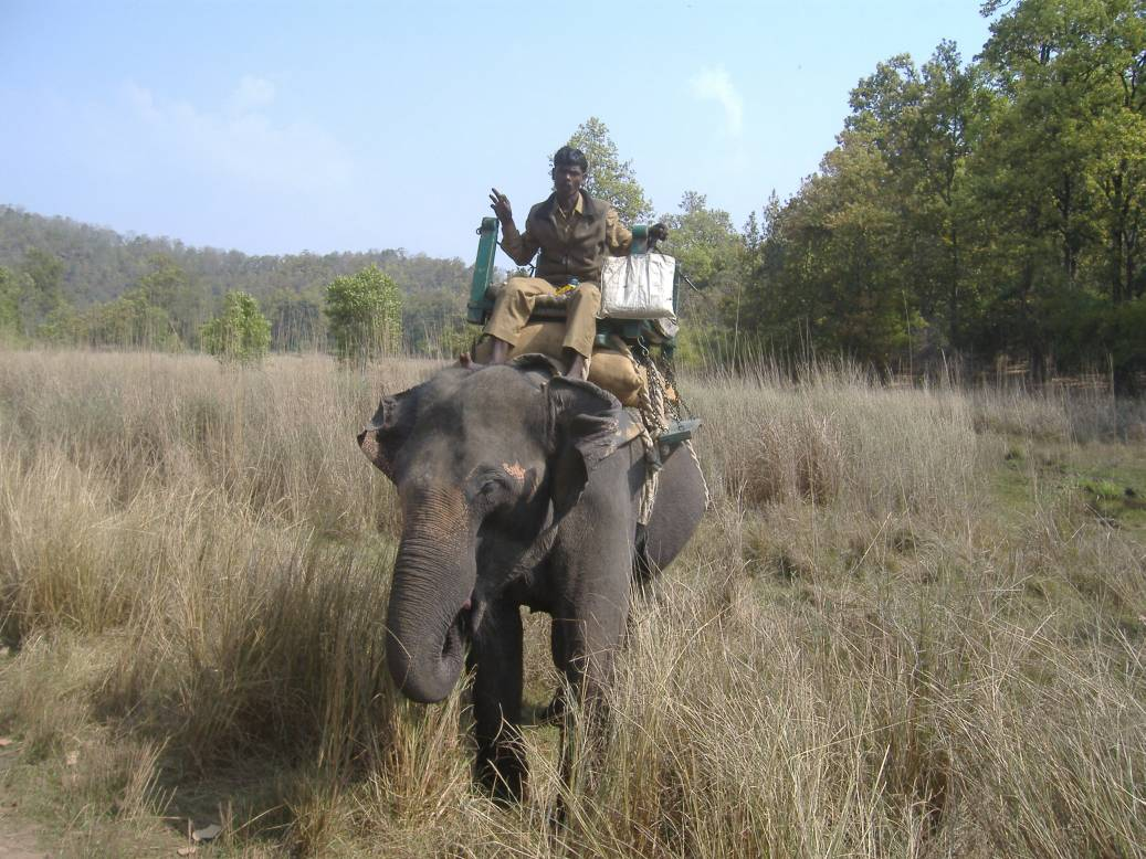Elephant ride in Kanha National park